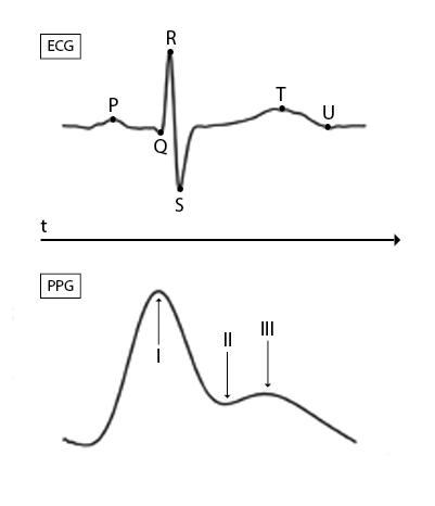 Confronto andamento frequenza cardiaca ECG vs PPG